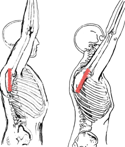 Your Shoulder Hurts. Is Your Scapula Tilting - Athletes ...
