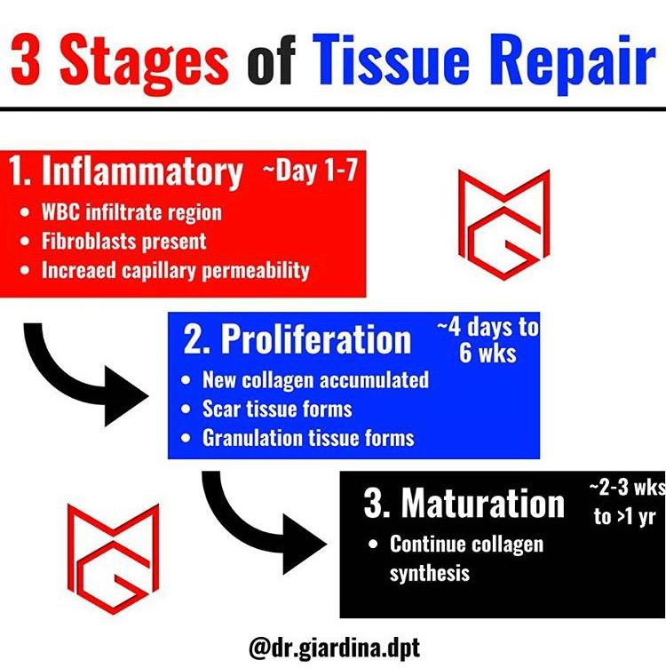Peace Love An Updated Guide To Managing Soft Tissue Injuries Athletes Potential